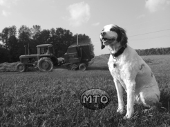Brittany Enjoying the Country Life - Black & White